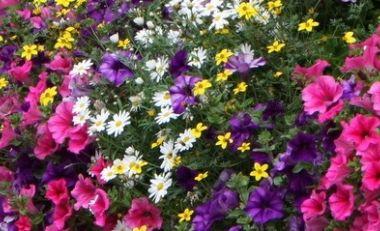 Jetzt Blumenkistchen bepflanzen