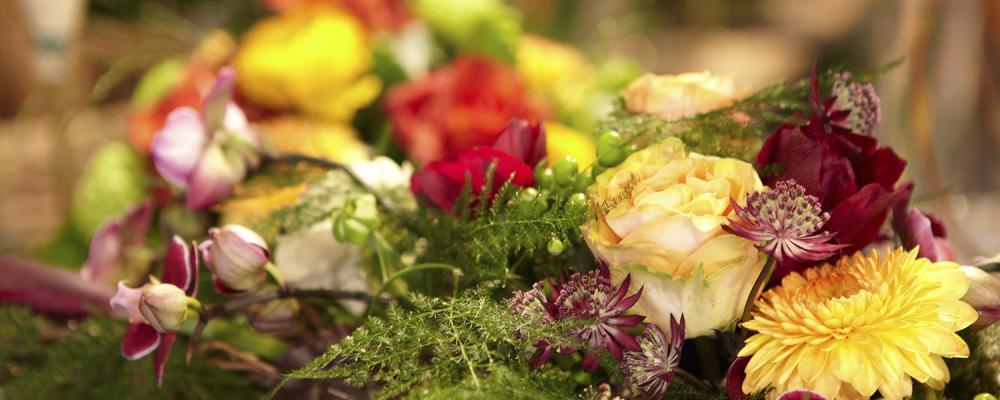 Floristik in Saanen & Zweisimmen